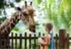 Top 10 cele mai frumoase Grădini Zoologice din Europa